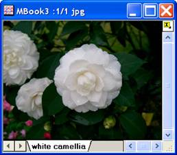 ImgBlend help English files image004.jpg